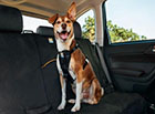 Hyundai Pet Accessories